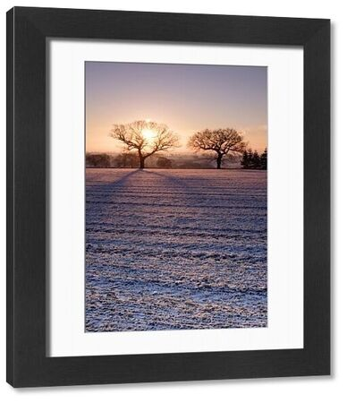 View of snow covered ploughed field with sun rising behind bare trees, Yorkshire, England, december