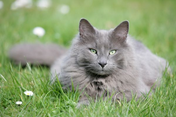 best cat repellent products