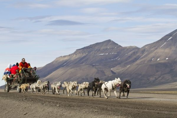 Domestic Dog, sled team pulling trailer with tourists, near Longyearbyen, Spitzbergen, Svalbard, july