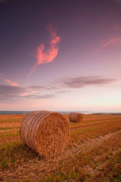Round straw bales in stubble field at sunset, with distant view of River Taw onto The Bar in Bideford Bay, Springfield Farm, near Marwood, North Devon, England, september